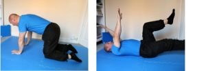 Cats and camels exercises